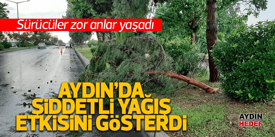 Şiddetli yağmur ağaçları devirdi
