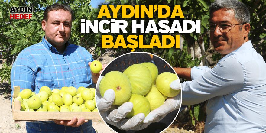 İlk incir hasadı Buharkent'te başladı