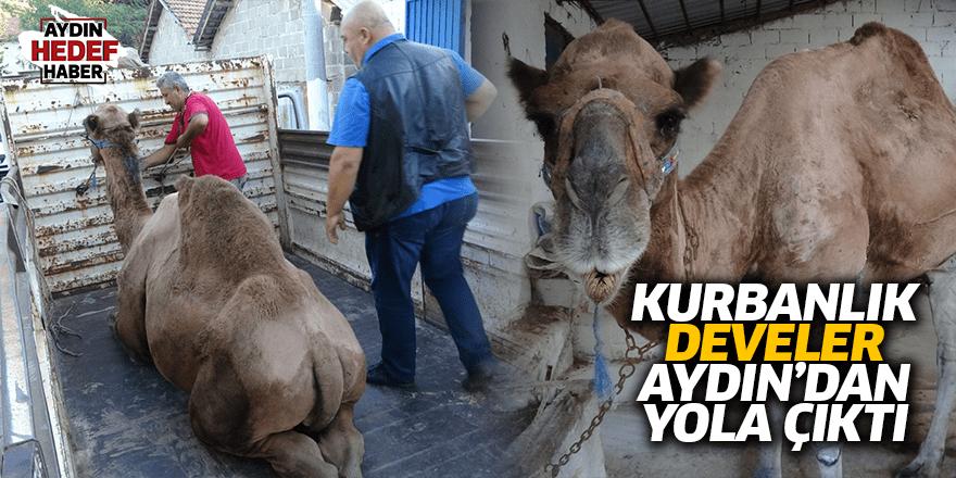 Kurbanlık develer yola çıktı