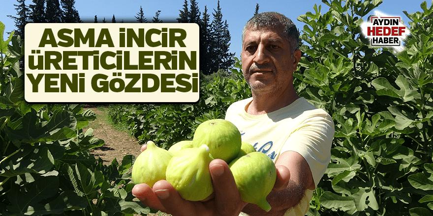 Asma incir üreticilerin yeni gözdesi olacak