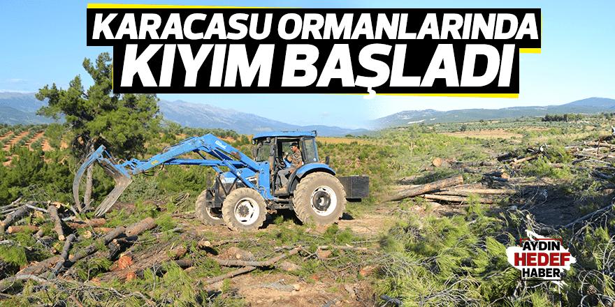 Karacasu ormanlarını kesiyorlar