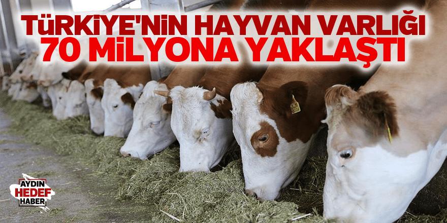 Türkiye'nin hayvan varlığı 70 milyona yaklaştı