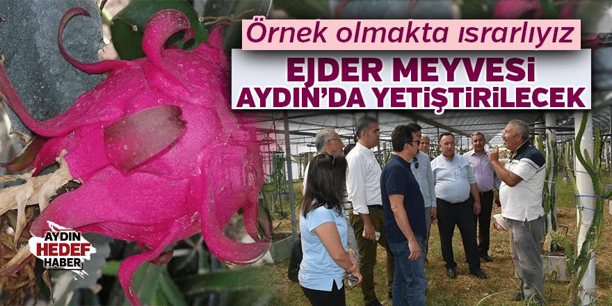 'Ejder Meyvesi' Aydın'da da yetiştirilecek