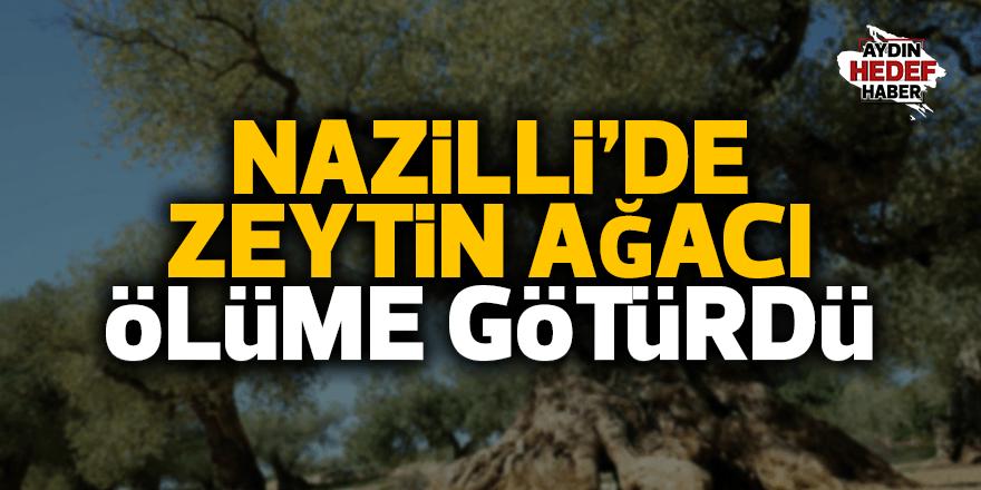 Nazilli'de zeytin ağacı ölümü oldu