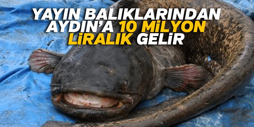 Yayın balıklarından Aydın'a 10 milyon liralık gelir