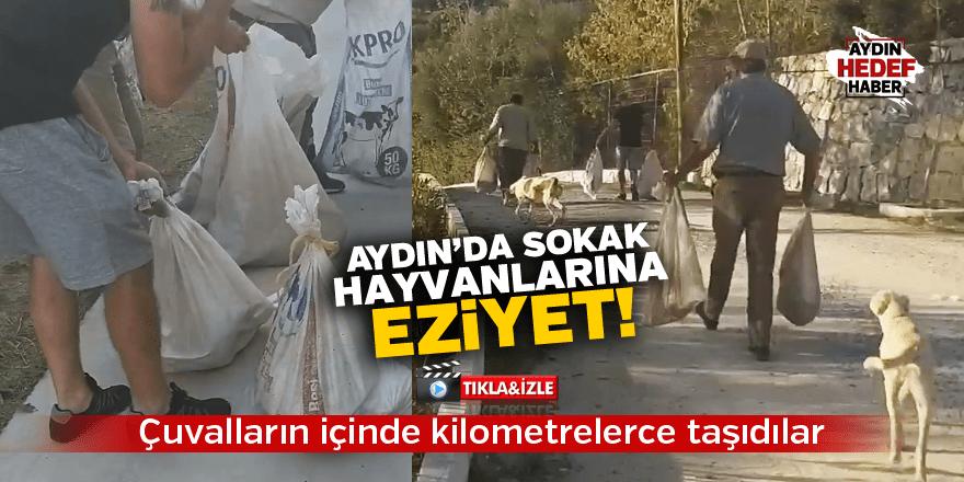 Aydın'da sokak hayvanlarına eziyet