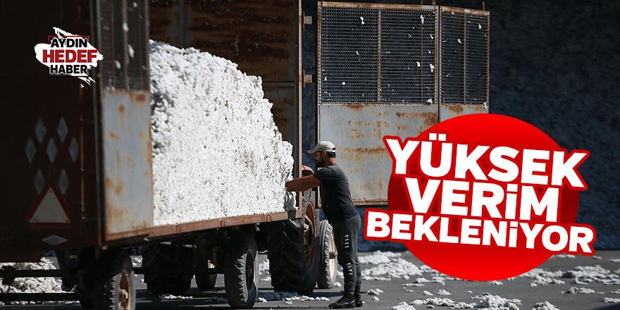Egeli pamuk üreticileri yüksek verim bekliyor