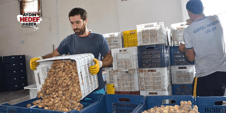 Tariş İncir Birliği 17 günde bin ton kuru incir alımı yaptı