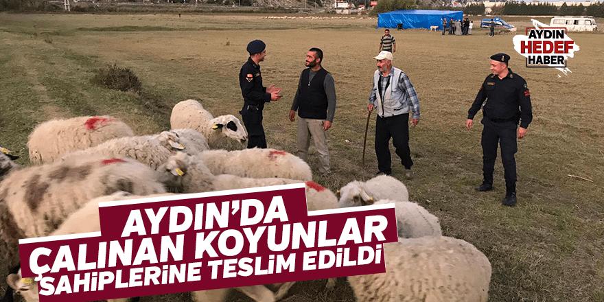 Çaldıkları koyunları satarken suçüstü yakalandılar