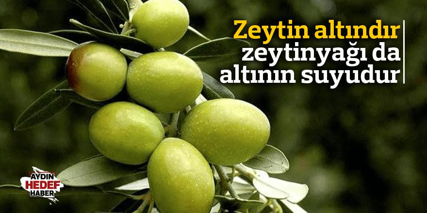 Zeytin altındır, zeytinyağı da altının suyudur