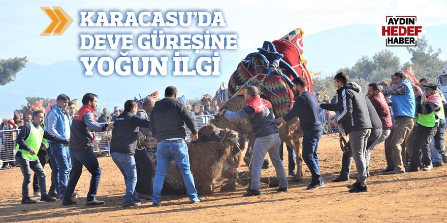 Karacasu'da deve güreşine yoğun ilgi