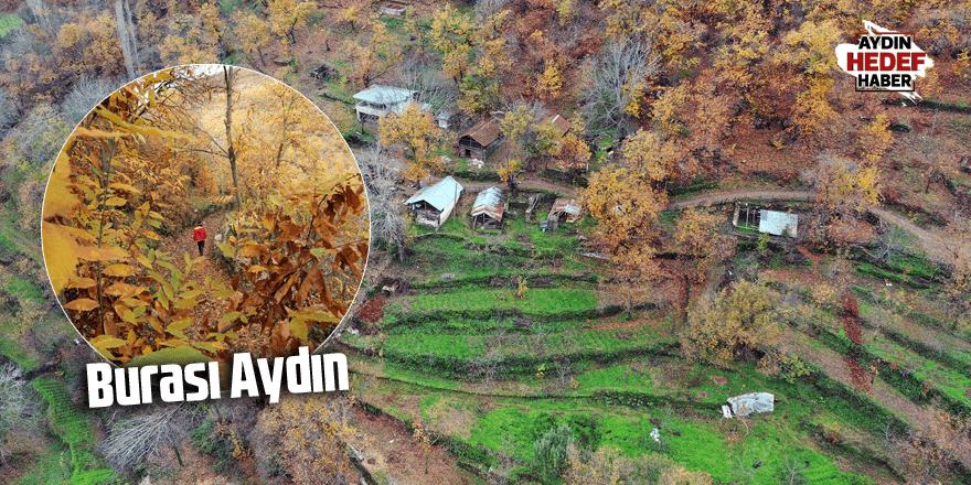 Aydın'da sonbahar manzarası