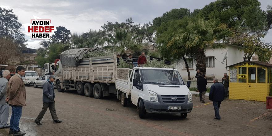 Didim'de zeytin üreticilerine ucuz fidan desteği