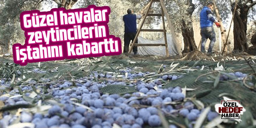 Güzel havalar zeytincilerin iştahını kabarttı