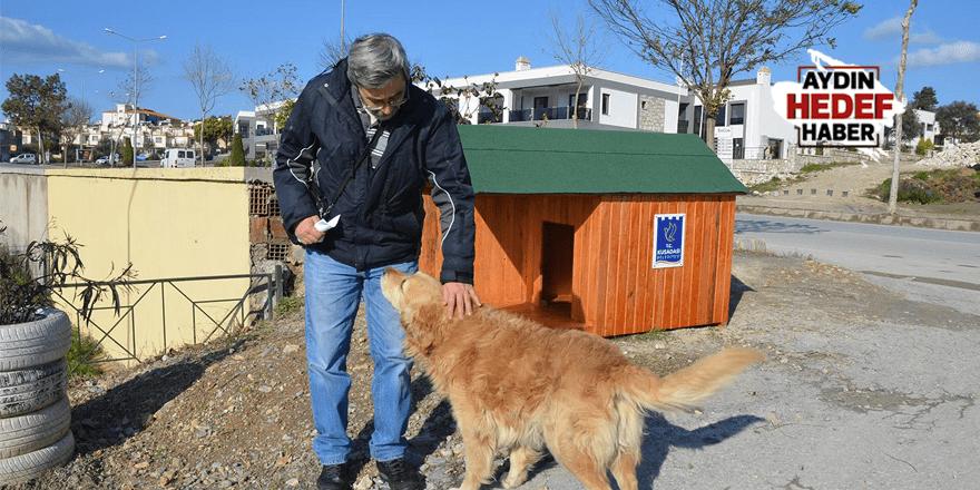 Yeni yılda sokak hayvanlarını unutmadı