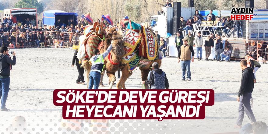 Söke'de deve güreşi heyecanı yaşandı