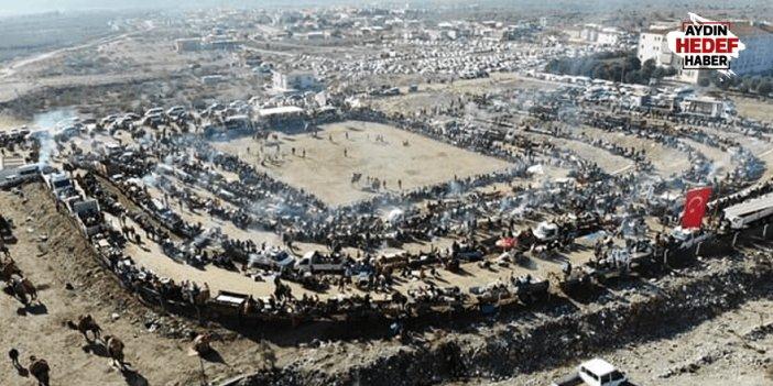 Buharkent'te deve güreşine yoğun ilgi