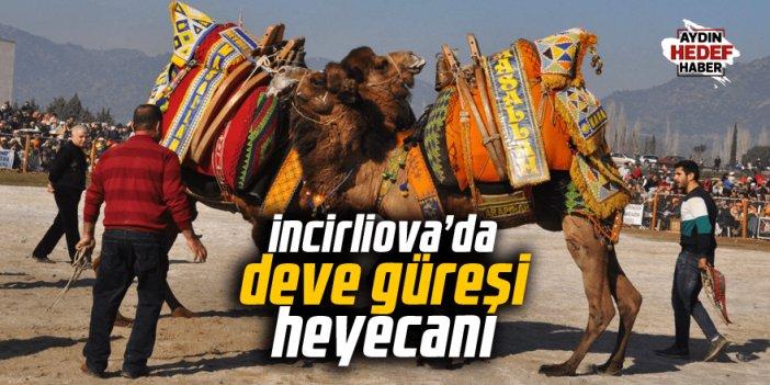 İncirliova'da deve güreşi heyecanı