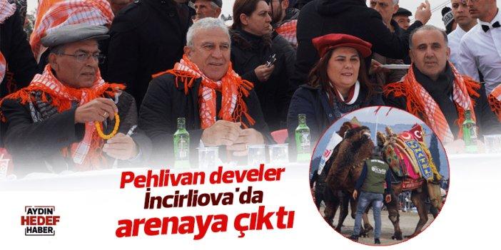 Pehlivan develer İncirliova'da arenaya çıktı