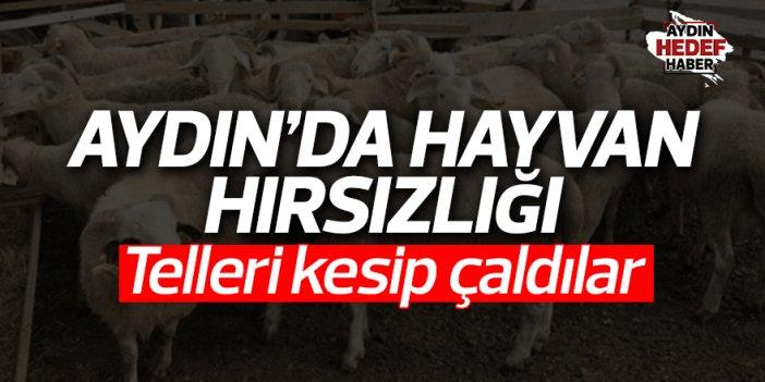 Aydın'da hayvan hırsızlığı