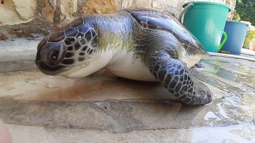 deniz-kaplumbagalarindan-bir-iyi-bir-kotu-haber-227020-4182083dc239ff1ead52f77d5f95fa5b.jpg