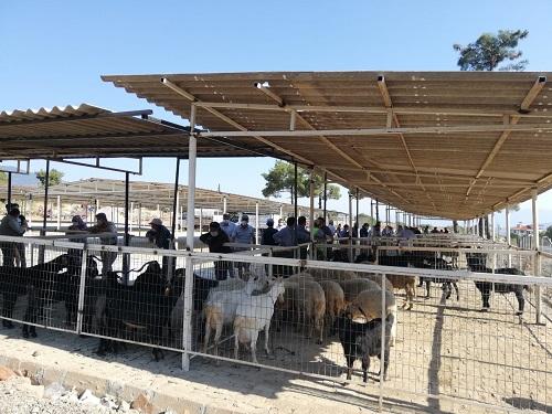 karacasuda-canli-hayvan-pazari-yeni-yerinde-hizmete-girdi-168178-d20ab30d6dca4aa7cb7a7b875d0d69cf.jpg
