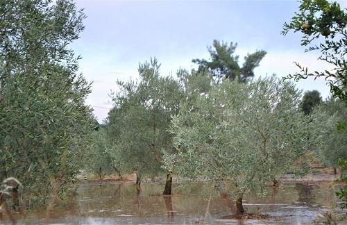 karacasulu-vatandasin-karayollarina-isyani-173089-589960cd9738dbef9478df8443a891b1.jpg