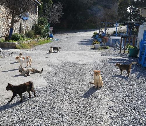 pandemi-doneminde-kediler-sokaga-birakildi-205040-35c77c9831878dbb249061a94d2a6355.jpeg
